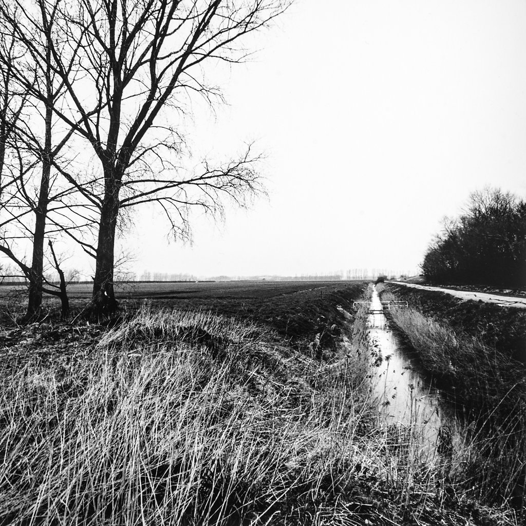 Ditch, Hasse Fen